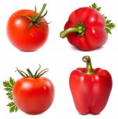 Photo-realistic vector. Red vegetables with parsley.