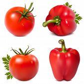 Vetor foto-realista. Legumes vermelhos com salsa.