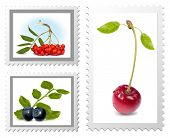 Vector. Postage stamps. Berries.