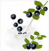 Vector illustration. Ripe blueberry falling into the milky splash.