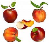 Conjunto de vectores de manzanas y duraznos maduros.
