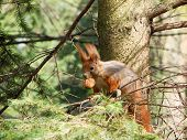 picture of vinnitsa  - A squirrel hanging on tree mammal beauteful - JPG