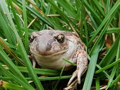 A Toad Sitting