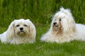 Dogs Resting On Grass