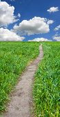 path across green field in nice day