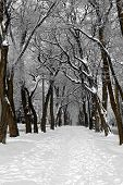 winter alley in park
