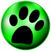 picture of paw-print  - Paw button on white background  - JPG