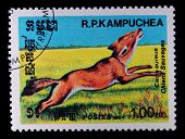 KAMPUCHEA - CIRCA 1984: A stamp printed in Kampuchea showing fox, circa 1984
