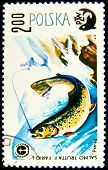 POLAND - CIRCA 1979: A stamp printed in Poland shows fish Brown trout - Salmo trutta morpha fario, circa 1979