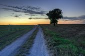Colorful Sky And Clouds After Sunset, Over A Dirt Road Through Fields And A Lone Growing Tree poster