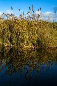 View On Autumn Landscape Of River And Grass In Sunny Day. Grass On River Coast In Autumn Day. Reflec poster