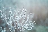 Frost On The Branches In Winter. Winter Landscape.winter Background With Snow Branches Tree Leaves . poster
