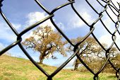 Fenced Tree Landscape