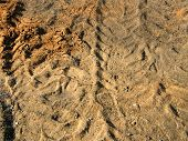 Tacks In The Dirt