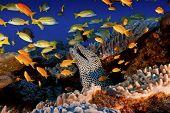 Busy Reef Scene
