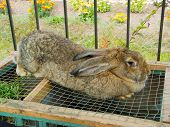 picture of rabbit hutch  - Big rabbit sits on the cage - JPG