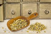 organic chamomile herbal tea - rustic wooden scoop and a pile on rough white painted barn wood with a primitive apothecary drawer cabinet