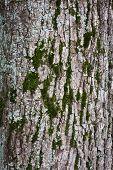 Casca de árvore com musgo Closeup