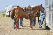 picture of western saddle  - A saddled rodeo horse stands ready while tied to its trailer - JPG