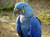 Blue Parrot @ Sedgwick County Zoo