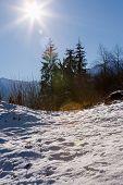 Alpine scene, Swiss alps