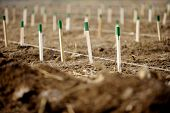 picture of afforestation  - Wooden stakes for supporting tree saplings growing - JPG