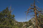 Treetops San Jacinto State Park