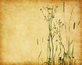 Grunge image with blooming wildflowers on sky background . Added paper texture