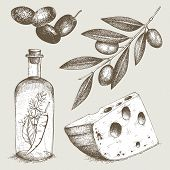 stock photo of collate  - Vector collection of ink hand drawn olive illustration - JPG