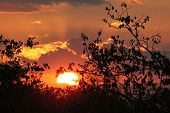african sun setting in kruger park