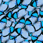 Compilation Of  Blue Butterflies In A Great Background Texture