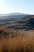 Winter Grasses And Dry Landscape In Orange Free State