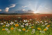 pic of garden eden  - Summer landscape with chamomile dandelion and anemone - JPG