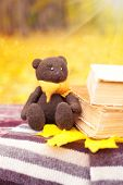 Bear, leaf and books on a bench