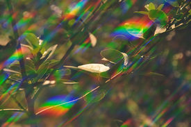 picture of prism  - Plant photosynthesis abstract prism light reflections on sunny spring day - JPG