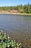 picture of ural mountains  - The river in the polar Urals Sunny day - JPG