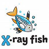 X-ray Fish For Abc. Alphabet X