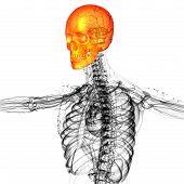 3D Render Medical Illustration Of The Skull Bone