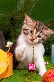 Cute kitten playing Christmas decoration on artificial green grass