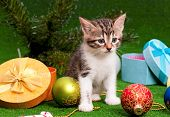 Cute kitten with Christmas gift box on artificial green grass