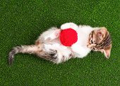 Cute kitten playing red clew of thread on artificial green grass, top view