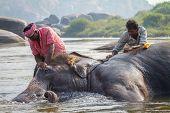 HAMPI, INDIA - FEBRUARY 5, 2013: Unidentified men bath Lakshmi, the temple elephant, in the river on February 5, 2013 in Hampi, Karnataka, India. Hampi is a UNESCO world heritage site.