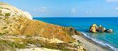 The Scenic Shore