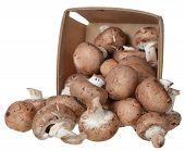 Mini Portabella Mushroom