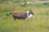 A Deer Get Caught In The Lid Of Rubbish Bin