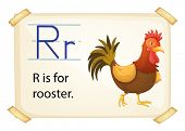 stock photo of cockfight  - A letter R for rooster on a white background  - JPG