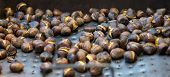 Background texture of fresh roasted chestnuts cooling on a metal tray ready to be eaten as a healthy snack or dessert