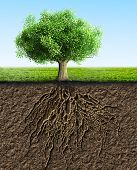 picture of loam  - a green tree with roots and soil - JPG