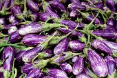 Fresh Organic Fairytale Eggplant Background, Photo Taken At Local Farmers Market