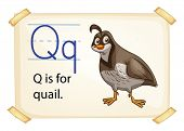 A letter Q for quail on a white background